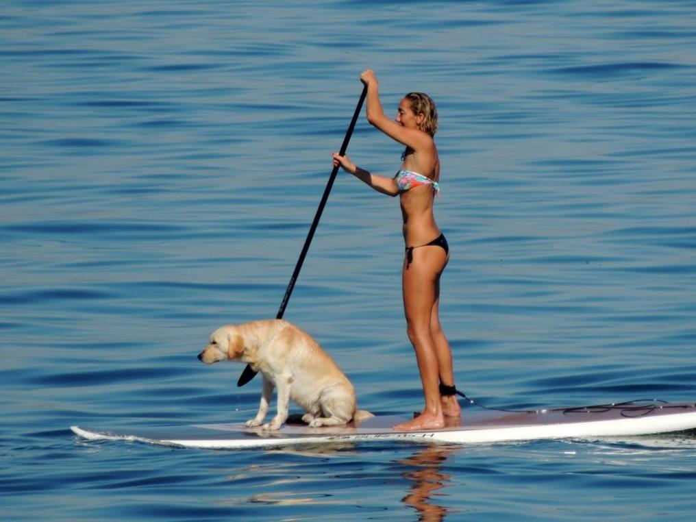 stand-up-paddle-com-cachorros-no-rio-de-janeiro2-1024x768